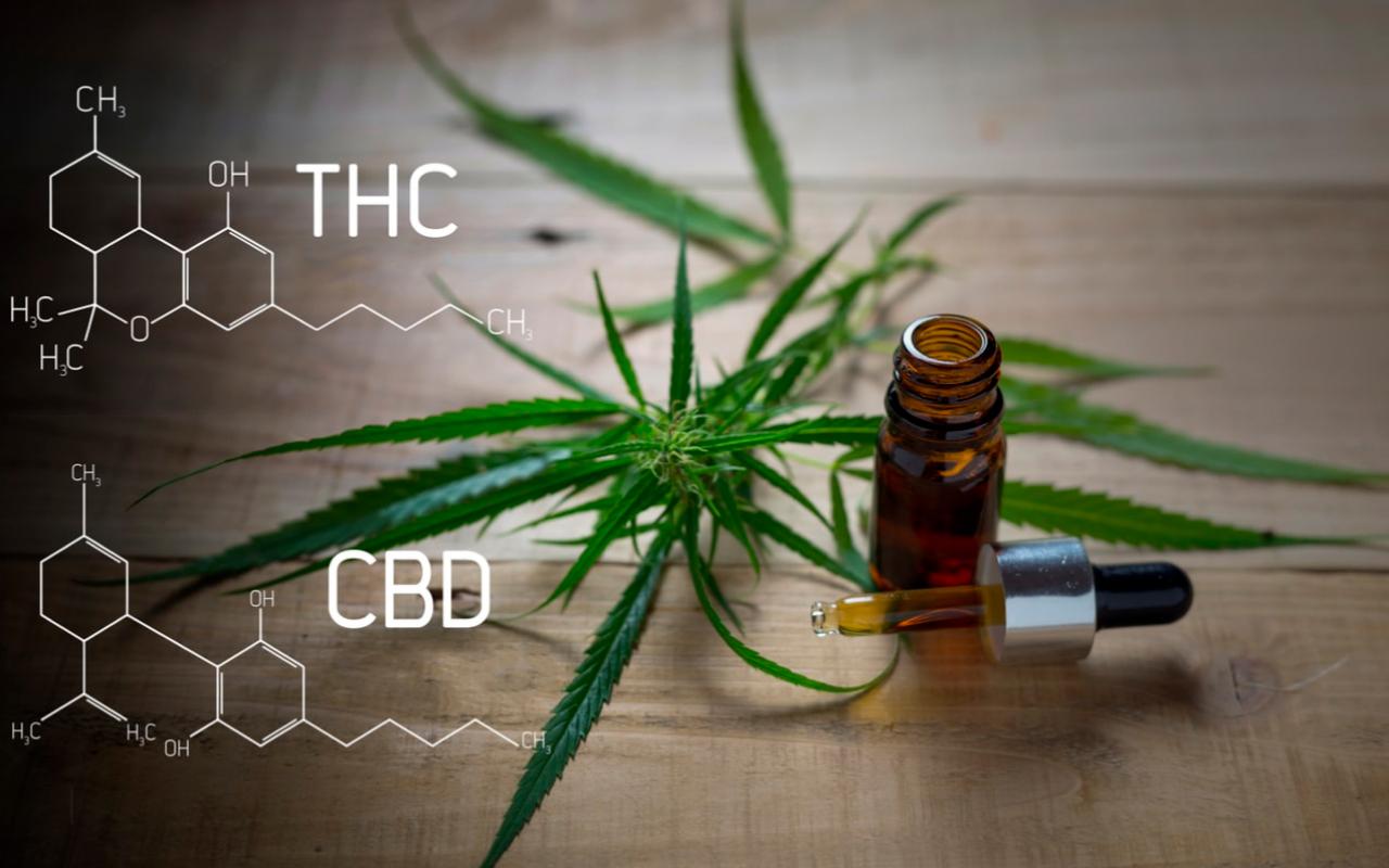 CBD gegen THC: Was ist der Unterschied?